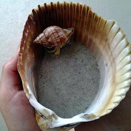 Hemit Crab by Tammy Hoge - Animals Sea Creatures (  )