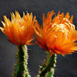 Orange cactus flower by Gaylord Mink - Digital Art Things ( orange, plant, cactus, flower )