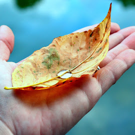 by Alexandra Tsalikis - Nature Up Close Leaves & Grasses ( leaf, yellow, water drop )