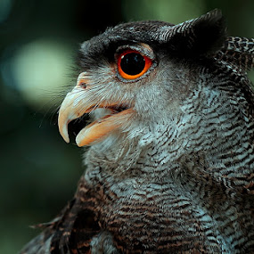 by Satriyo Andoyo - Animals Birds