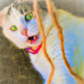 CAT PLAYING by Roxanne Dean - Animals - Cats Playing ( face, string, green eyes, cat, funny,  )