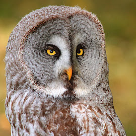 Coup d'oeil par dessus l'épaule by Gérard CHATENET - Animals Birds