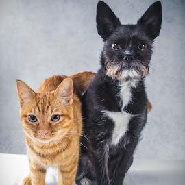 Best friends by Patricia Konyha - Animals - Dogs Portraits