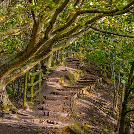 Path Up The Hill by Darrell Evans - Landscapes Forests ( wood, grass, green, oak, outdoor, path, trees, woodland, walkway, steps, leaves, landscape, woods )