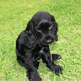 My grass straw by Michelle Oxley - Animals - Dogs Puppies