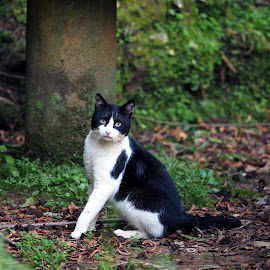 by José António Duarte Moura - Animals - Cats Portraits