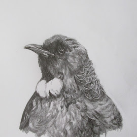 Tui heads up by Virginia Nicol - Drawing All Drawing ( pencil, tui, art, birds, drawing )