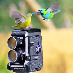 Date! by Itamar Campos - Animals Birds