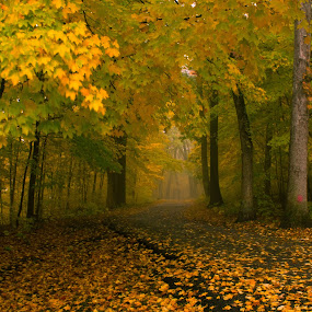 After the rain by Samer Shaur - Landscapes Forests ( bighill park, pwcautumn, fall trees, forest, fallcolors )
