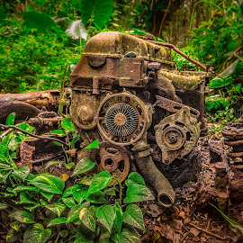 mother nature wins by Kelley Hurwitz Ahr - Artistic Objects Other Objects ( kauai, jungle, object, decaying )