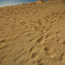 Colorado Sand Dunes by Sarah Chambers - Landscapes Deserts