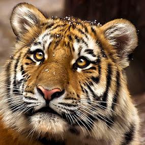 Thank You by Cheri McEachin - Animals Other Mammals