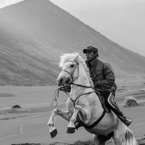 White Horse by Pudjiyanto Oentoro - Animals Horses ( canon, people )