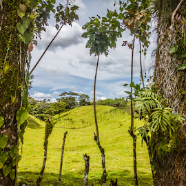 Costa Rica Farm by Laurie Crosson - Landscapes Mountains & Hills ( mountain, farm land, tree, costa rica )