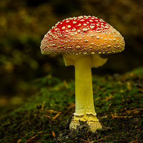 Un(b)eatable by Peter Samuelsson - Nature Up Close Mushrooms & Fungi ( fungi mushroom )