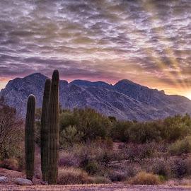 First Light by Charlie Alolkoy - Landscapes Deserts ( clouds, desert, sky, sunset, arizona, tucson, sunrise )