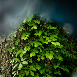 vines by Jim Oakes - Nature Up Close Other plants ( tree, color, outdoors, oay )