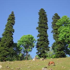 GREEN GRASSES & BLUE SKY by Ajit Kumar Majhi - Landscapes Prairies, Meadows & Fields (  )