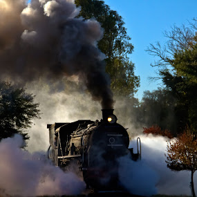 Train by Trippie Visser - Transportation Trains ( sky, train, trees, smoke, steam )