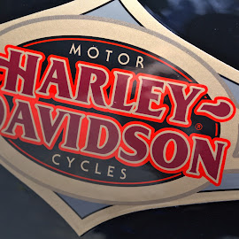 H-D Tank Logo by Cal Brown - Transportation Motorcycles ( motorcycle, gas, tank, harley davidson, graphic, transportation )