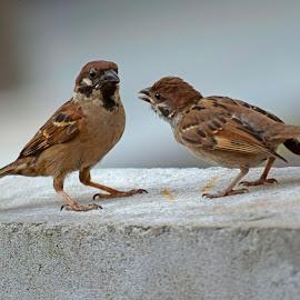 Couple by AbngFaisal Ami - Animals Birds