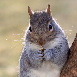 Snack by Kathy Jean - Uncategorized All Uncategorized ( kathyjean, seeds, rodent, squirrel, animal )
