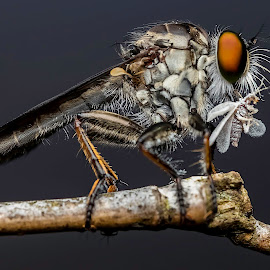 by KC Soo - Animals Insects & Spiders (  )