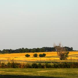 Kansas Summer Evening by Monica Hayden-Carroll - Landscapes Prairies, Meadows & Fields ( prarie, summer, kansas, fields )