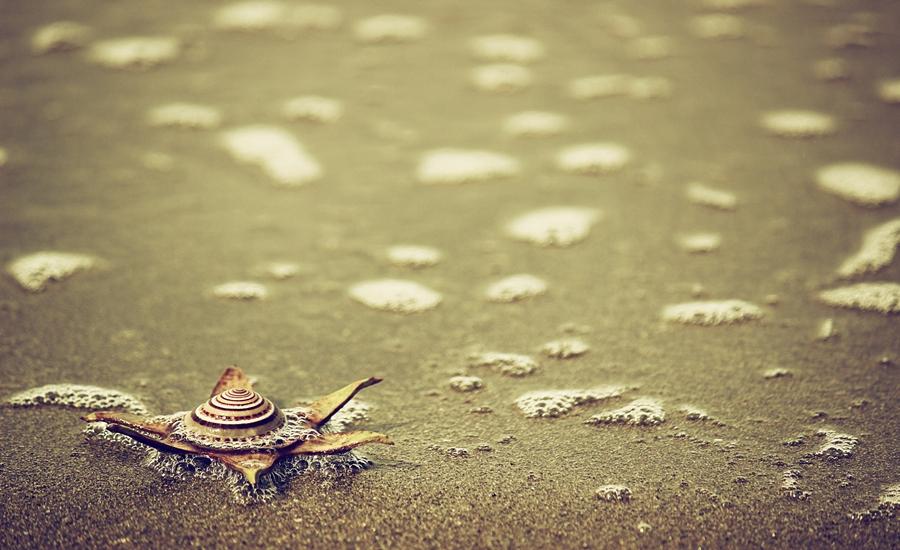 starfish by Firmansyah Goma - Novices Only Objects & Still Life ( laut, bintang, still life, starfish, bolmut,  )