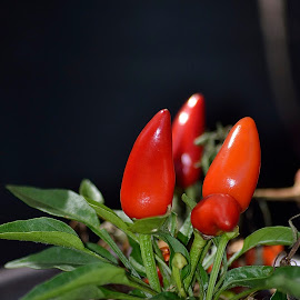 Is a chilli a fruit or a veg   :) by Richard Booysen - Food & Drink Fruits & Vegetables ( hot, chilli,  )