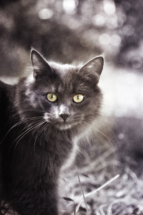 Poppy by CLINT HUDSON - Animals - Cats Portraits
