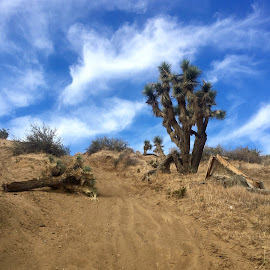by Mike Martinez - Landscapes Deserts