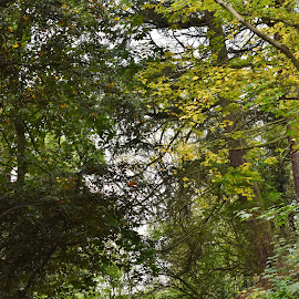 footpath to the trees  by Eloise Rawling - Nature Up Close Trees & Bushes ( footpath, autumn, trees, woods )