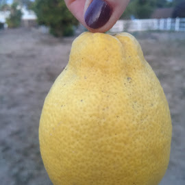 much ado about  lemons by Rebecca Bayles - Nature Up Close Gardens & Produce