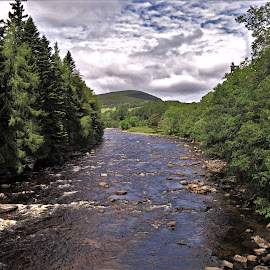 by Phil Bear - Landscapes Forests ( forest, river dee, uk, river, scotland )