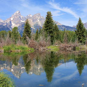 Majestic Grand Tetons by Vicki Pardoe - Landscapes Mountains & Hills ( mountains, majestic, trees, reflections, grand tetons, peaks )