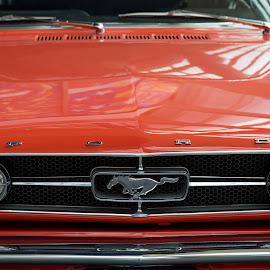 Mustang #2 by Tomasz Karasek - Transportation Automobiles ( car, mustang, red, front, ford, close-up )