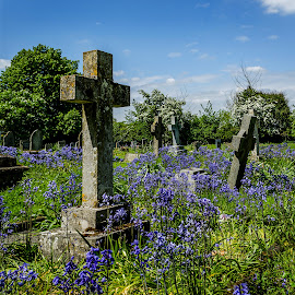 Bells and Crosses by Heather Ryder - City,  Street & Park  Cemeteries ( blue, churchyard, bluebell, grave stones, cross )