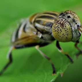 Up close by Ruben Dela Cruz - Animals Insects & Spiders