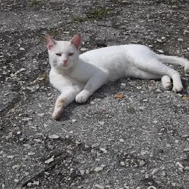 Котка by Georgi Kolev - Animals - Cats Portraits ( котка., път., бял., ден., светлина. )