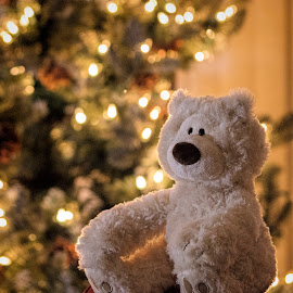 Christmas Bear by Pat Eisenberger - Artistic Objects Still Life ( holiday, toy, teddy bear, christmas, christmas tree, stuffed toy, stuffed bear )