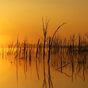 by Roger Becker - Landscapes Waterscapes ( waterscape, sunset, trees, sunrise, landscape )