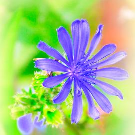 by Barbara Palaith - Nature Up Close Gardens & Produce