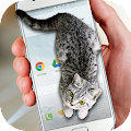 Cat Walks in Phone Cute Joke APK for Kindle Fire