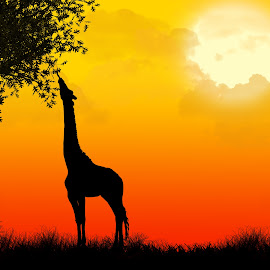 African Silhouette by Jasmine Curtis - Illustration Animals ( giraffe, silhouette, sunset, safari, africa, landscape, photoshop )