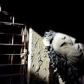 Light Shadow Magic  by Santanu Goswami - Artistic Objects Other Objects ( religion, lion, statue, artistic objects, hinduism )