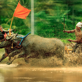 Buffalo Race in Bali by Ade Irgha - Sports & Fitness Rodeo/Bull Riding ( explore bali )