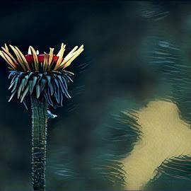 Crown of glory  by Todd Reynolds - Digital Art Things