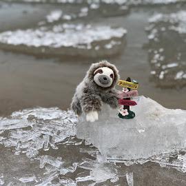 Good Vibes by Liana Lputyan - Instagram & Mobile iPhone ( goodvibes, happyanimal, happiness, coldweather, ice, toysphotography, chicago, frozenlake, toy, lakemichigan, slowloris )