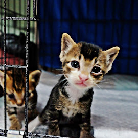 by Devyani S.Rathore - Animals - Cats Kittens